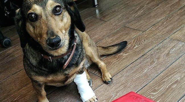 Így állítsd össze a kutyád elsősegélydobozát!