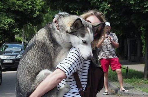 Cuki: Nézegessen indokolatlanul halálra rémülő kutyákat!