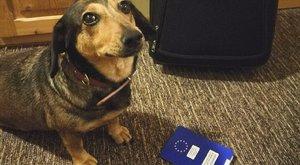 Jó tudni: ennyi idő alatt, ennyiért kapja kézhez a kutyaútlevelet