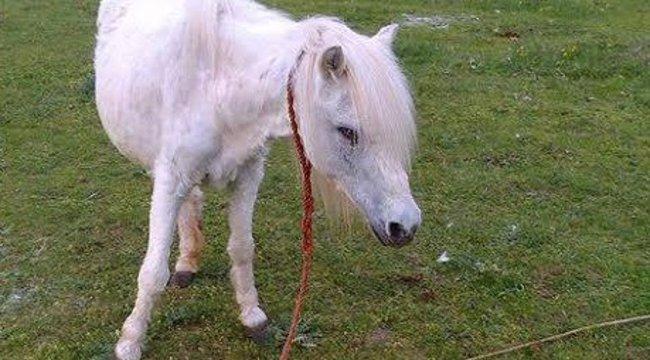 Őrült jakabszállási gazda: a lovaim húsát akarják az állatvédők!
