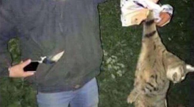 Állatorvosi egyetem hallgatói kínoztak állatokat