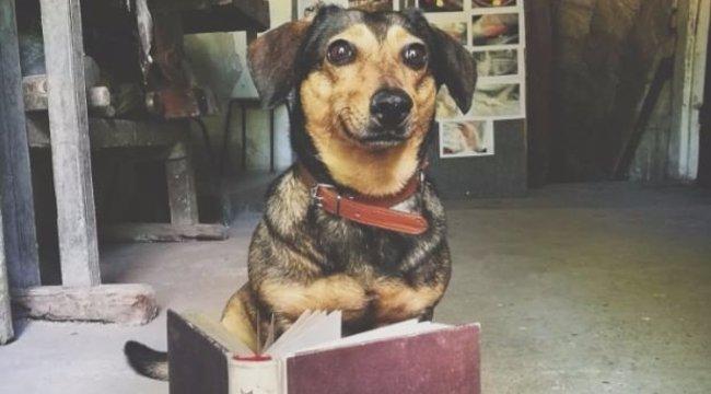Ilyen egy borbarát kutya - fotó