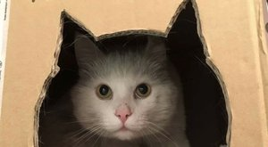 Tankolni várja rajongóit Túró Gróf,a benzinkúti cica