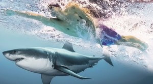 Úszóverseny: Phelps cápával, Cseh lajhárral mérné össze az erejét