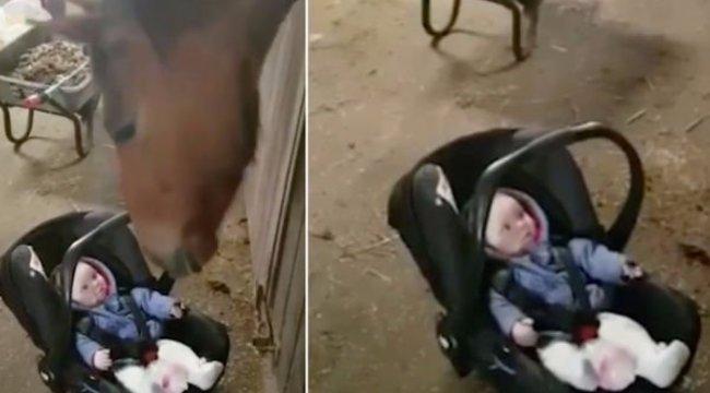 Hihetetlen cukiság! Ló ringatta el a síró kisbabát - videó