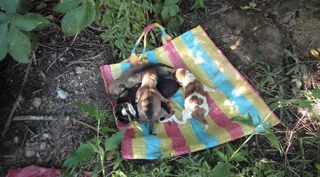Mezőcsáti állatkínzás: bokrok közé dobták a szatyorba csomagolt kiskutyákat (18+)