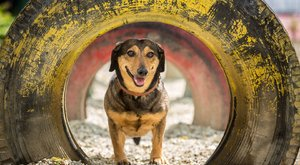 Meglógott az értekezletről a Bors kutyája