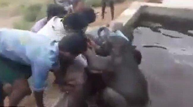 Víztározóból kellett bébielefántot menteni - videó