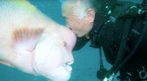 25 éve barátja a búvárnak ez az ajakoshal