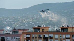 Zikavírust terjesztő szúnyog telelt át Magyarországon