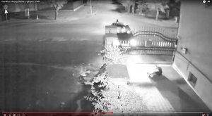 Részegen, az udvaron gázolták halálra a kutyát, és ezzel még nem ért véget a család kálváriája - 18+ videó