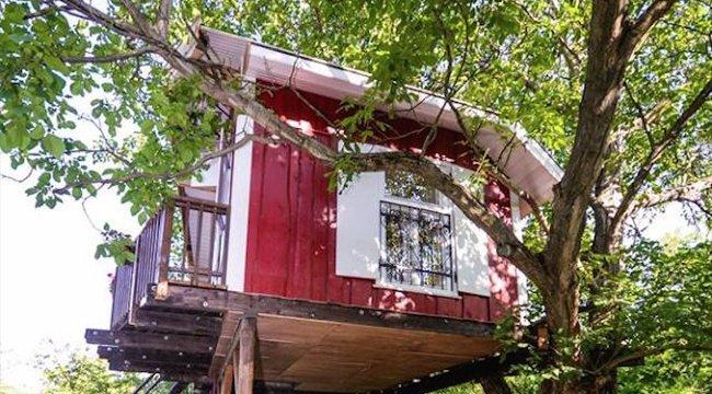 Diófára építették a házukat Emeséék – képek