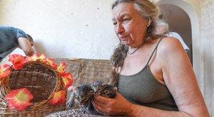 Kilakoltatták Szegeden tizenhárom macskájával a 69 éves Emőkét