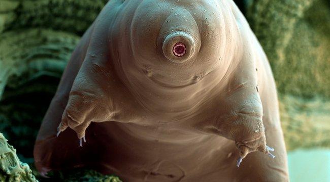 Vicces paraziták rágnak belülről minket
