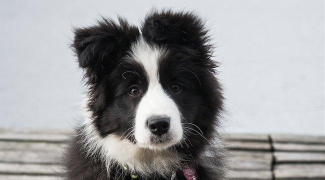Ezek a legokosabb kutyafajták