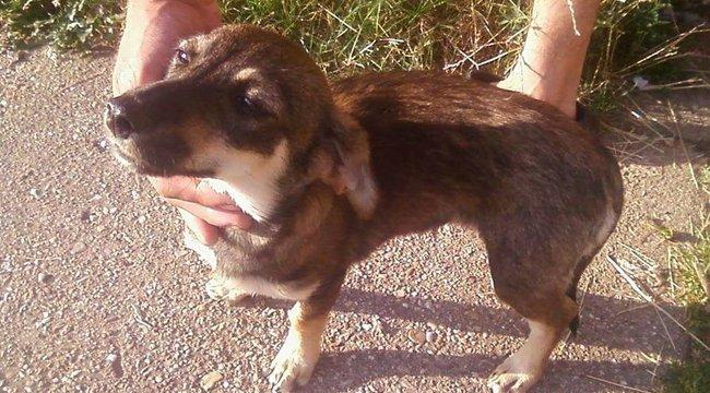 Állatkínzás Borsodban: patakba akarták dobni a szerencsétlen kiskutyát
