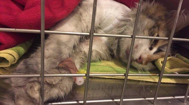 Elfogták a budapesti macskanyúzókat