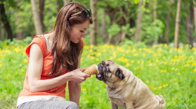 Meg is ölheti a kutyáját, ha felelőtlenül eteti