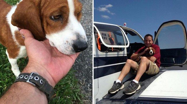 1200 kilométert repült, hogy megmentsen egy megerőszakolt kutyát a halál elől