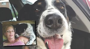 Fagyállós virslivel ölték meg Schörmann kutyust