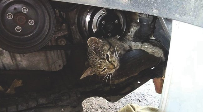 Szétszedték az autót a beszorult cica miatt