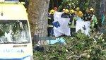 Madeirai tragédia: rég ki kellett volna vágni a magyar nőt is megölő tölgyet