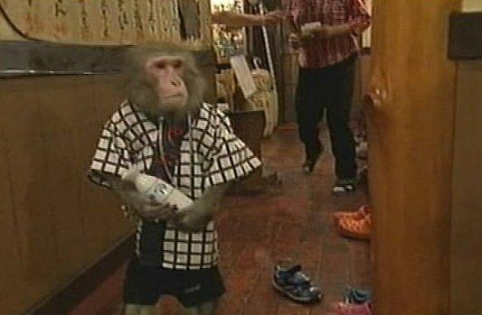 Ez a pincér egy majom! És tényleg – videó