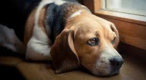 A szentesi HEROSZ-telepen 150-200 eb várja, hogy valaki hazavigye - Néha megváltás a kutyának a menhely