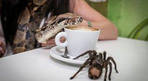 Kenguru és óriáskígyó jár a kávé mellé