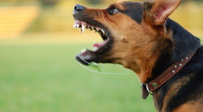 Döntött a bíróság: műtéttel kell elnémítani a hangosan csaholó kutyákat
