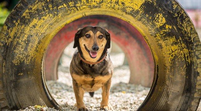 Láttál már kutyát így örülni?