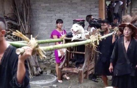 Itt a kutyákból király lesz, nem vacsora – videó