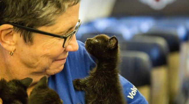Egyutasszállítónyi menhelyi állatot mentettek ki Houstonból – videó
