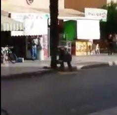 Kivágott egy fát, a nap idiótája lett ezzel– videó