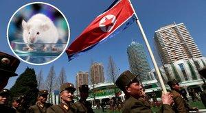 Kísérleti állatokat adunk el Észak-Koreának