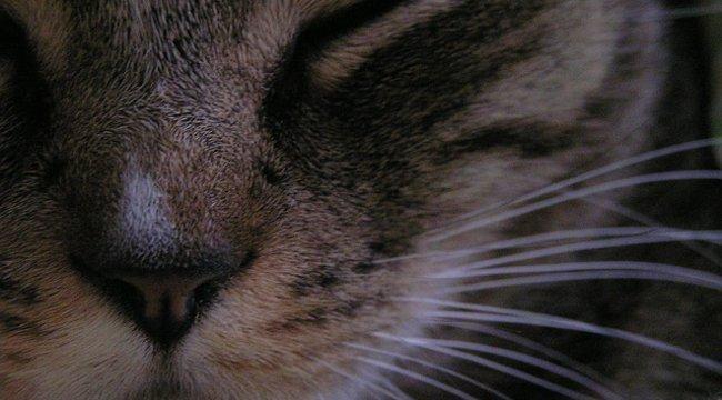 Bizarr állatkínzás: 130 macskát tartott 25 négyzetméteren egy francia nő – videó