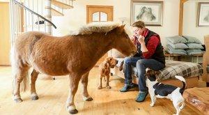 Tévézni is szokott gazdáival a kutyaként tartott póni