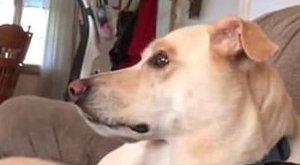 Ez a kutya kívülről fújja a Sponyabob főcímdalát – videó