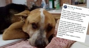 Fájdalmas kivégzést ígér: pénzért kínál állatkínzásta hirdetés