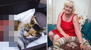 Ékszíj végzett Marika megnyúzott macskájával
