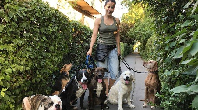 Nyolc kutyával jár sétálni Tornóczky Anita