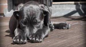 Horror egy kocsényi tanyán: kutyákat daráltak az elhanyagolt telepen? 18+