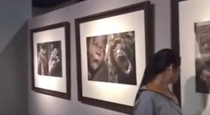 Durván rasszista kiállítás akasztotta ki a látogatókat