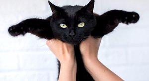 Féltik a cicákat a sátánistáktól