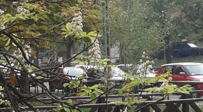 Októberi tavasz: kivirultak a gesztenyefák