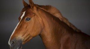 Lezuhant a budai Várból és elpusztult egy ló