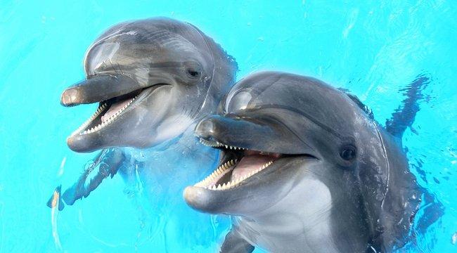 Delfinek hangja gyógyítaná Olivért