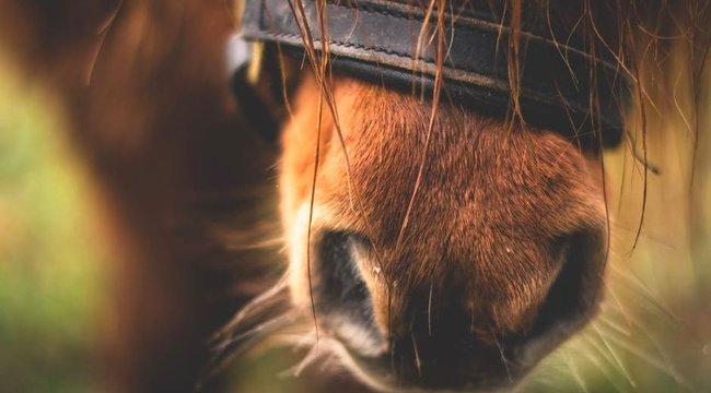 Lóval csalta meg a barátnőjét, nem csoda, hogy ezt kapta érte