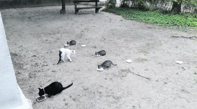 Mérgezik a János kórház kedvenc macskáit