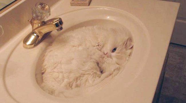 Szenzáció: a macska halmazállapota igazából folyékony!